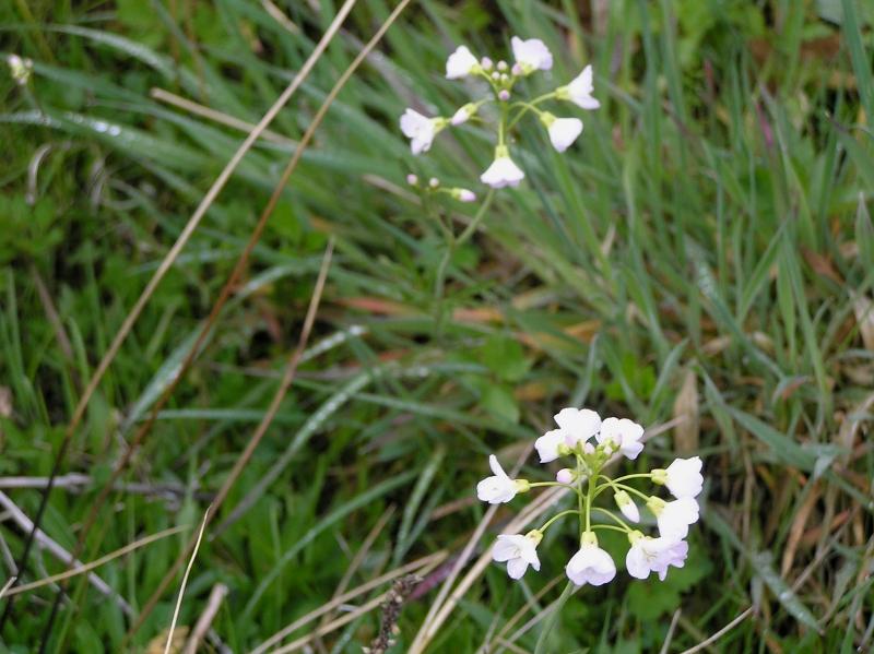 biały kwiatuszek