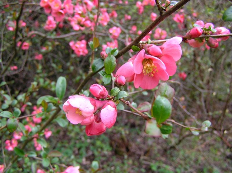 kwiat jakiegoś krzewu 1