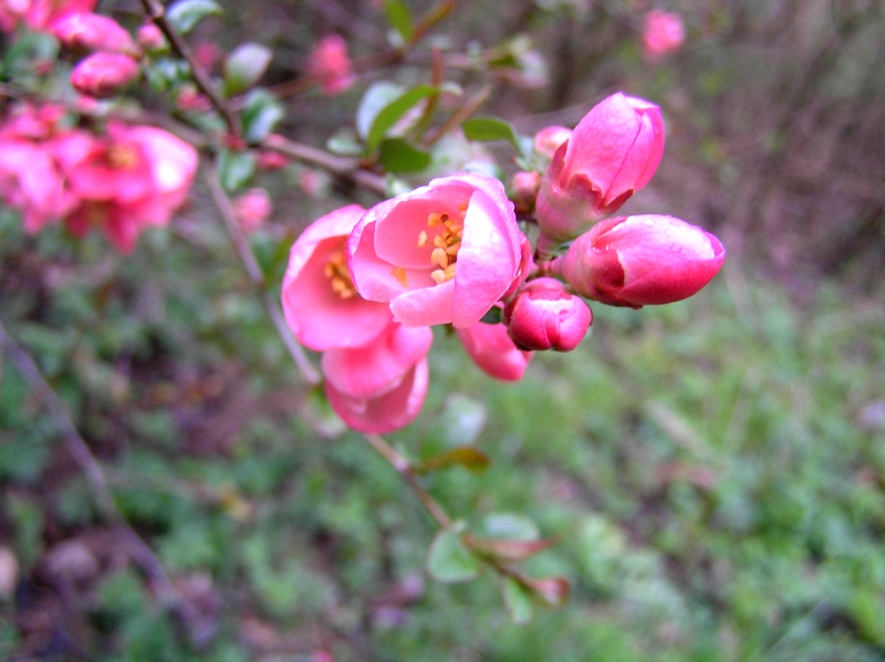 kwiat jakiegoś krzewu